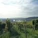 3 Rudesheim, wandeling naar Asbach _P1190923