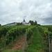 3 Rudesheim, wandeling naar Asbach _P1190944