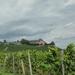 3 Rudesheim, wandeling naar Asbach _P1190949