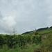 5 Rudesheim, wandeling Niederwald monument _P1190974