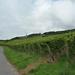 5 Rudesheim, wandeling Niederwald monument _P1190975