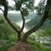 7 Romantische Rijn, Lorelei _P1200026