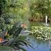 009 Mallorca oktober 2014 - hotel en tuin