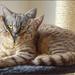 kat in jasje