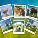 polaroid met dieren