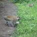 2b Lake Manyara, Lodge _P1210415