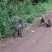 3c Lake Manyara NP _DSC00026