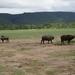 3c Lake Manyara NP _DSC00040