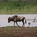 3c Lake Manyara NP _DSC00057