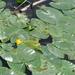 Gele plomp 2