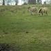 grasmaaiers op de Beninksberg