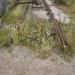 Nieuw bij lijn 11 27-06-2001
