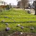 Lente in Leidschendam 13-03-2001