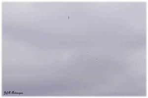 Zwerm vogels boven Houtdok en Mexicoeiland.