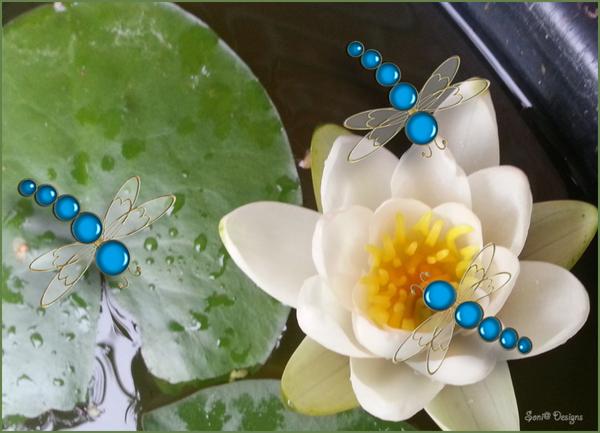 even een paar libellen getekend in photoshop
