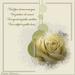 condoleance-Luikenaar_