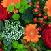 001  WELKOM IN FLANDERS LOVE...DEEL 3....