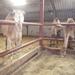 1 Berlicum, kamelenmelkerij _P1230428