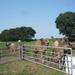 1 Berlicum, kamelenmelkerij _P1230445