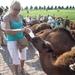 1 Berlicum, kamelenmelkerij _P1230453