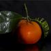 Clementine genetisch gemanipuleerd