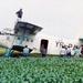 'RUBENBOMBER' land in maisveld met 21 Roemeense vluchtelingen PER