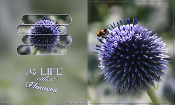 les-3-Lynne-flowers