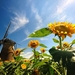 zonnebloemen-en-molen-hd-zomer-achtergrond