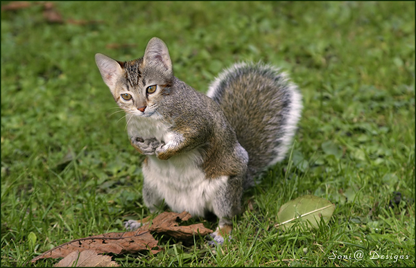 eekhoorn-kat