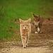 cat-2219169_960_720