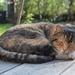 cat-2248921_960_720