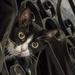 cat-2258190_960_720