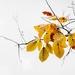 leaves-2210208_960_720
