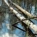 hd-achtergrond-met-bomen-in-het-water