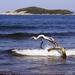 hd-achtergrond-met-eilanden-en-tak-in-het-water