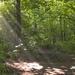 hd-achtergrond-met-pad-in-bos-en-zonnestralen