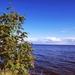 hd-achtergrond-met-water-en-boom-met-besjes