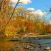 hd-achtergrond-met-bos-met-rivier-in-de-herfst