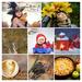bilder-frisch-gebackener-apfelkuchen-hd-apfeln-hintergrund-COLLAG