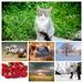 landschaft-wallpaper-sturm-gewitter-mit-blitz-hintergrundbilder-C