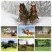 foto-van-een-paard-in-het-weiland-met-een-molen-op-de-achtergrond