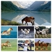 hd-achtergrond-drie-bruine-paarden-op-een-rij-hd-wallpaper-COLLAG