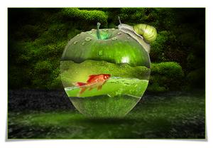 appel manipulatie