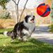 een-hond-speelt-met-een-bal-hd-honden-achtergrond