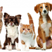 foto-honden-katten-achtergrond-huisdieren-wallpaper