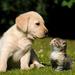 foto-van-een-hond-en-kat-op-het-gras-achter-in-de-tuin-hd-huisdie