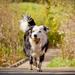 foto-van-een-hond-met-een-bal-in-zijn-bek-hd-honden-achtergrond