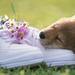 foto-van-een-slapende-hond-op-een-paar-schoenen