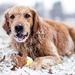 foto-van-een-spelende-hond-met-bal-in-de-sneeuw-hd-honden-wallpap