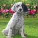 hd-achtergrond-hond-op-het-gras-in-de-tuin-hd-wallpaper-achtergro
